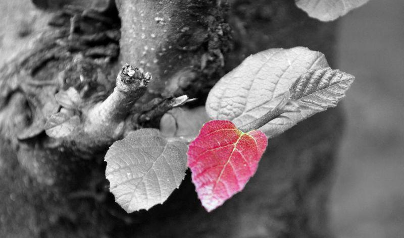 Say hello to Autumn (Passer le Bonjour à Automne)