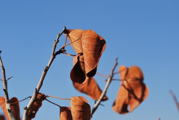 The latest sign of Autumn