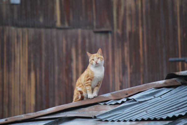 Cat on a Cold Tin Roof ;)