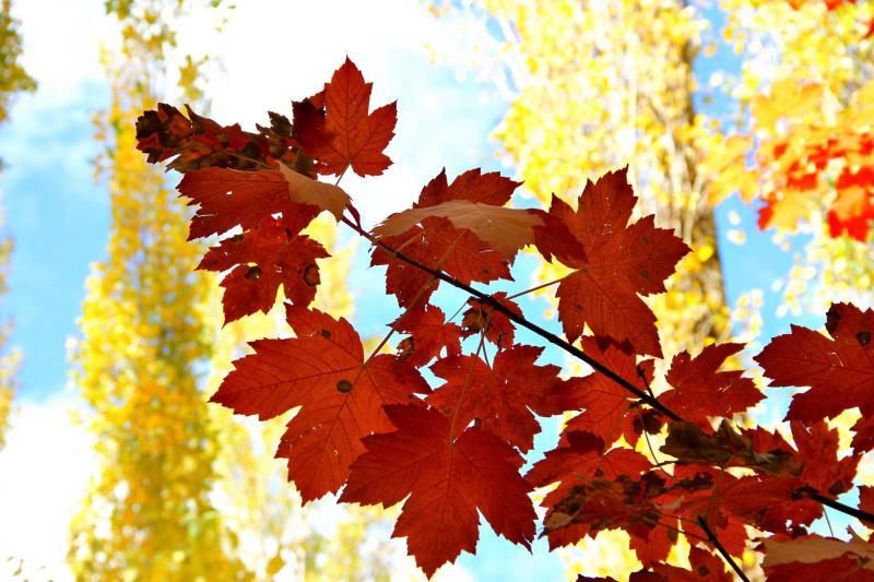 Autumn 7