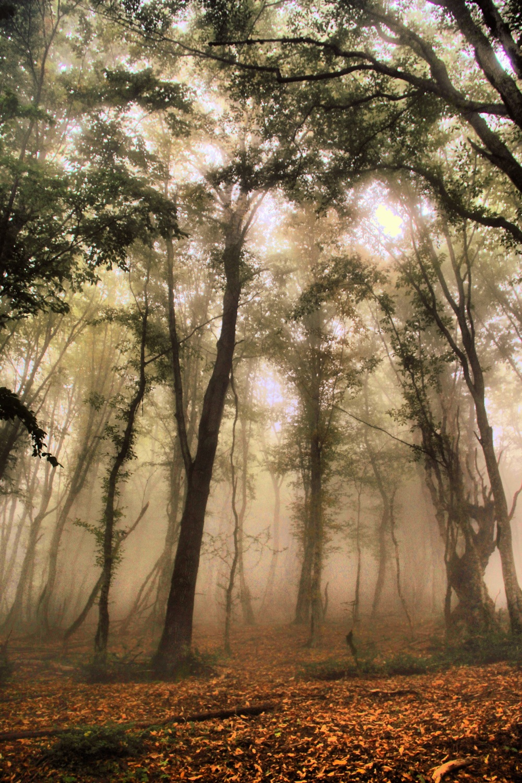 Alimestan Forest 2