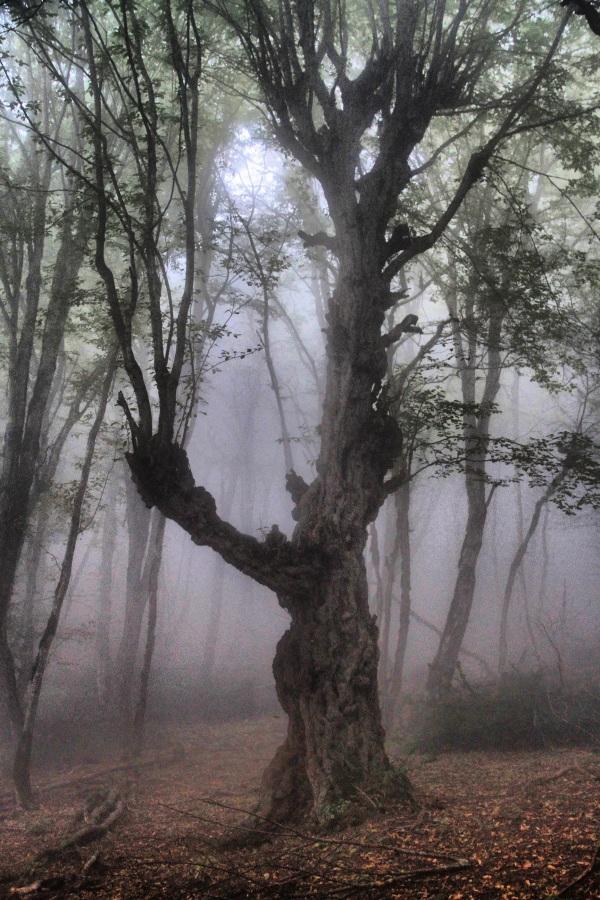Alimestan Forest 3