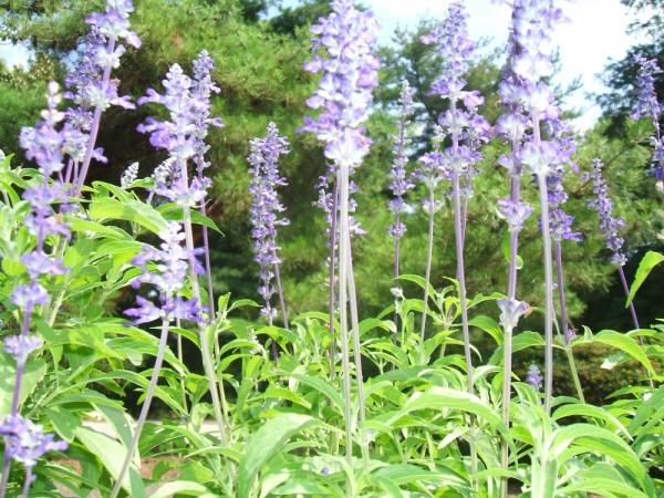 Flora of Temple Ambler