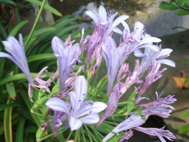 Flora of Temple Ambler, part four