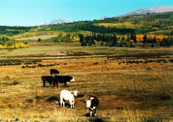 Silver Heels Ranch 2