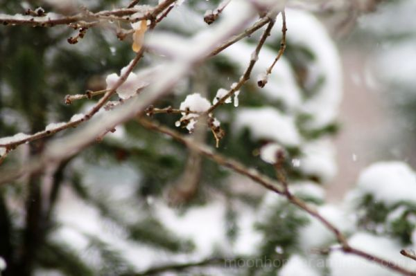 Easter Snow 6