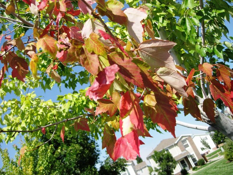 Fall beginning...
