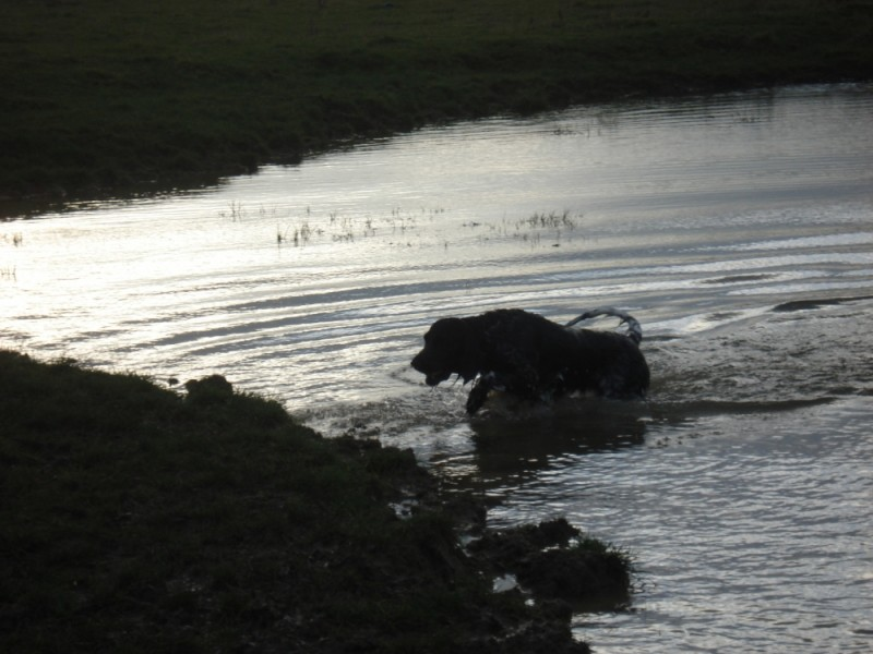 Meadow leaving the water after a dip