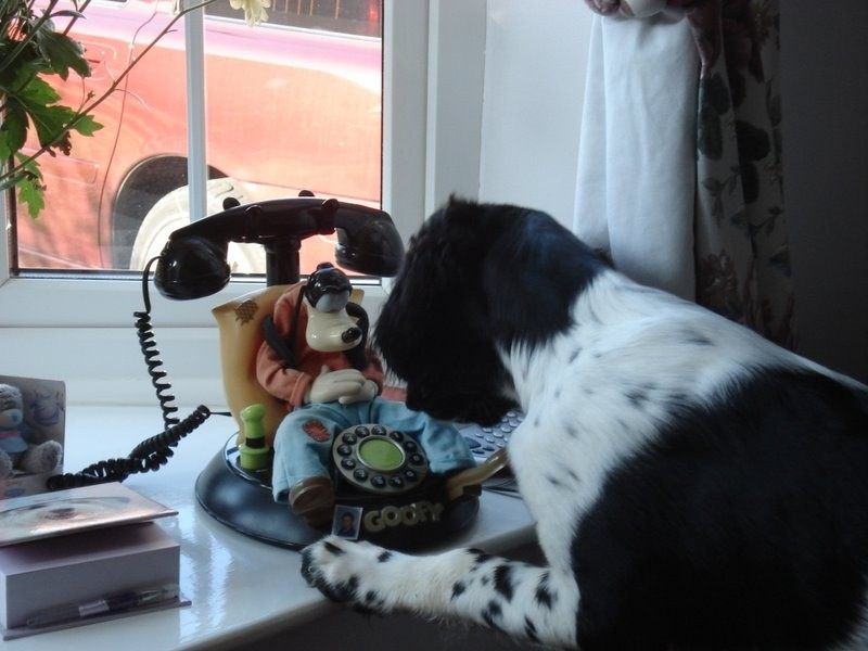 Jasmine checking out Goofey