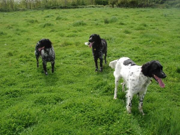 CARLA 'B', JASMINE & MEADOW