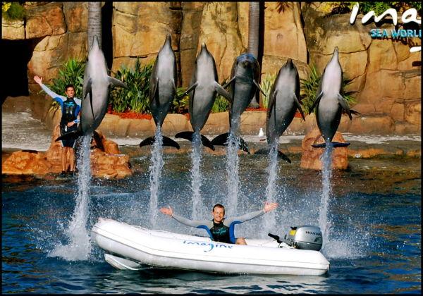 Cutie Dolphins