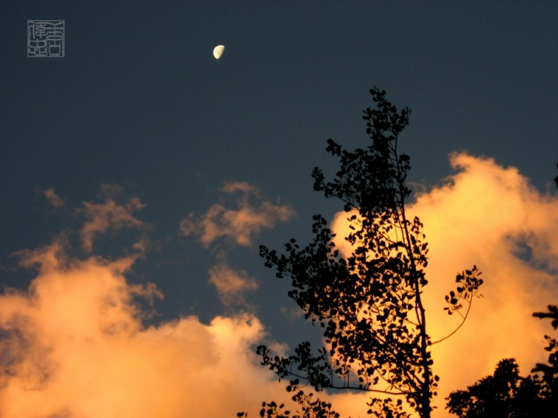 moon rising over trees with fluffy pink clouds