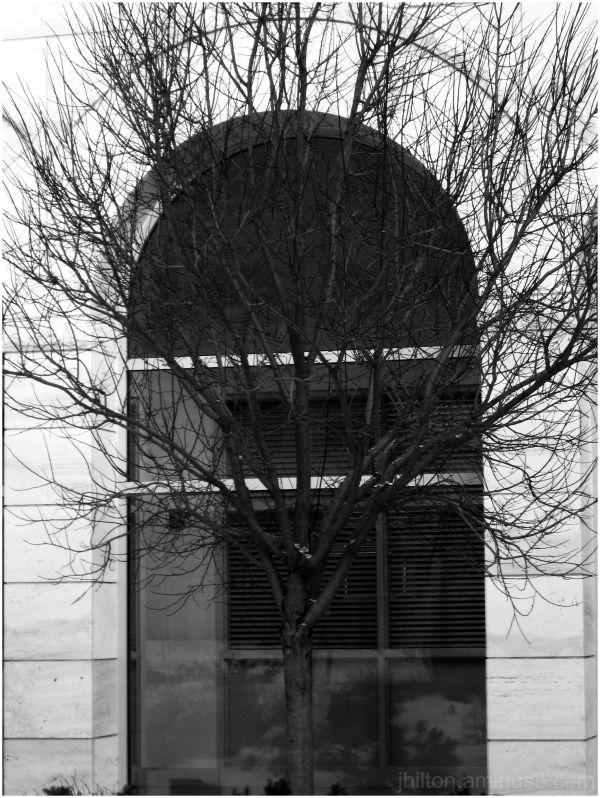 arch'ed tree