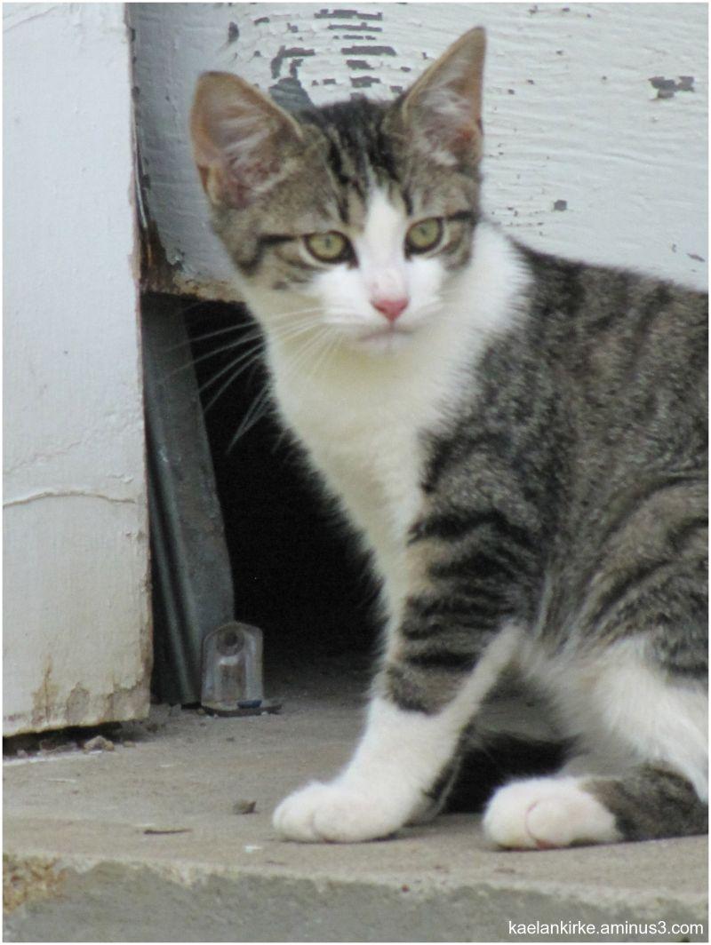 An Alert Kitten