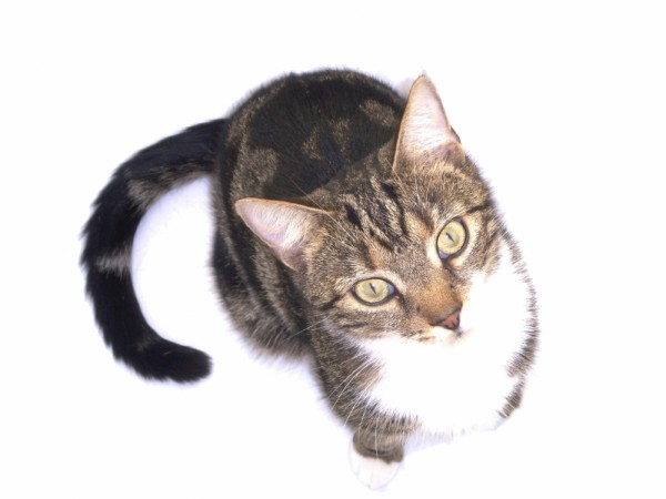 My Cat - JackJack