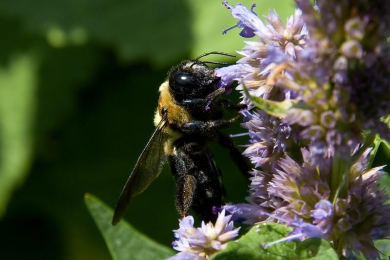 Generic Bee