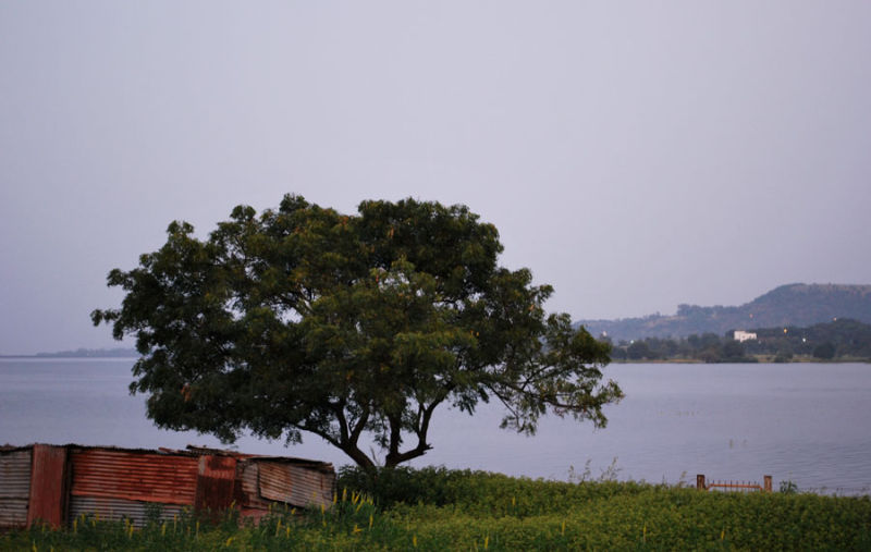 Tree and A Hut