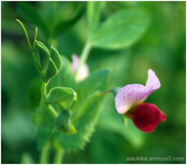 Efflorescence