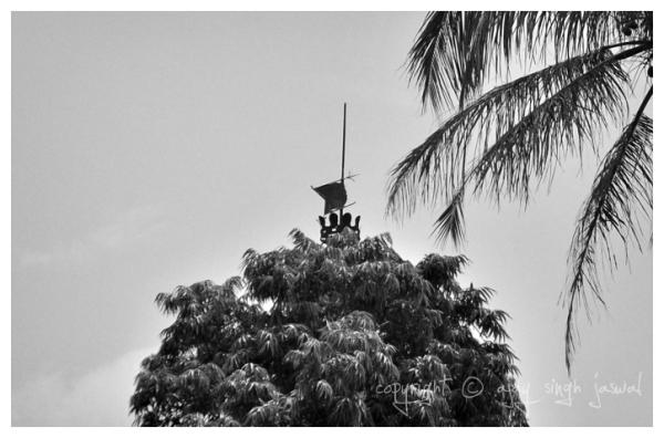 Tree Antenna