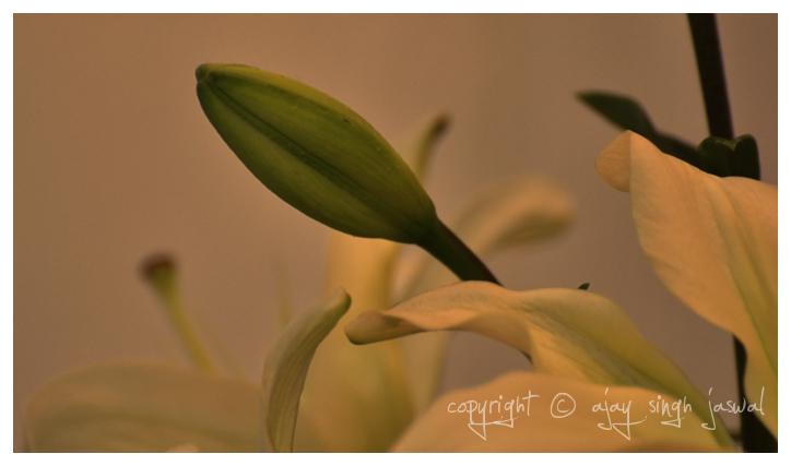 Upcoming Flower