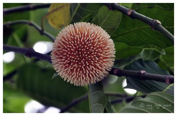 Flower Ball - 1/2