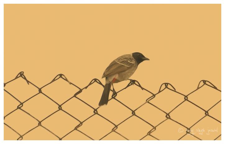 Fence Bird - 3 of 9