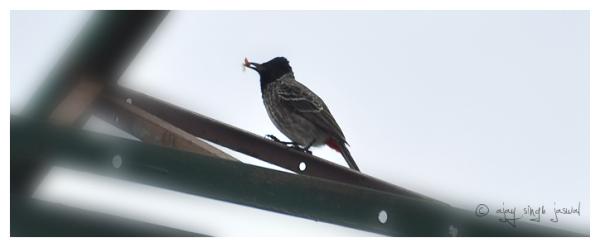Post Bird - 5 of 9