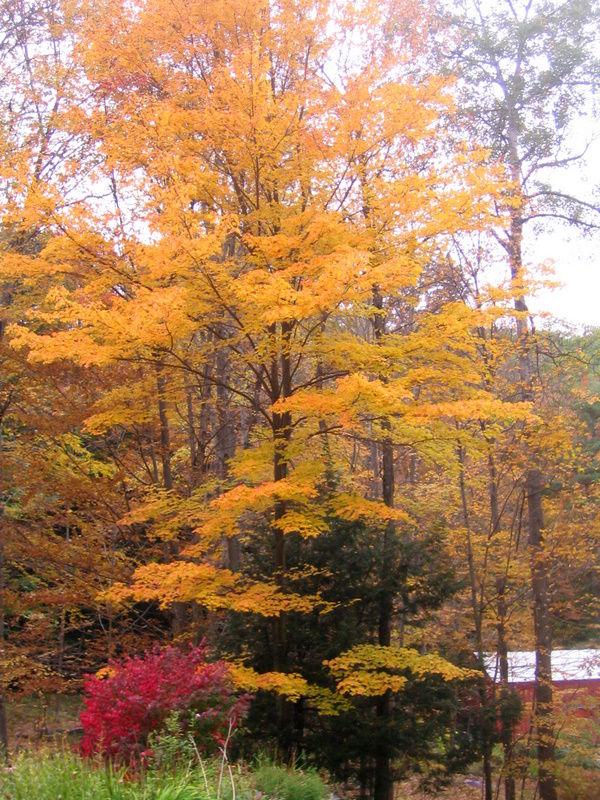 fall foliage 3