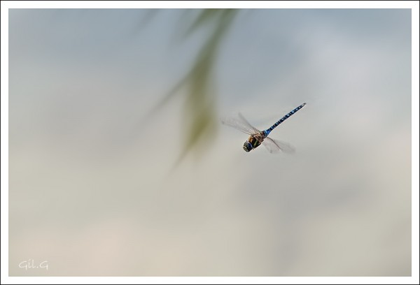 Sonic Dragonfly