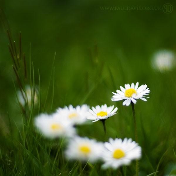 Some lovely daisy's in my garden.