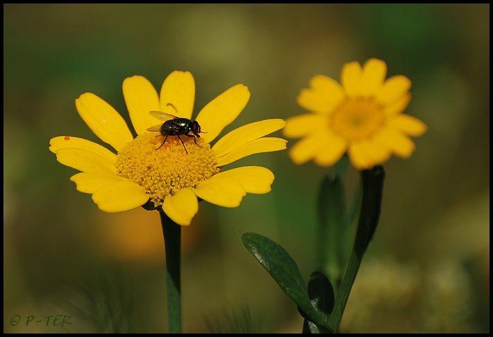 flower & fly