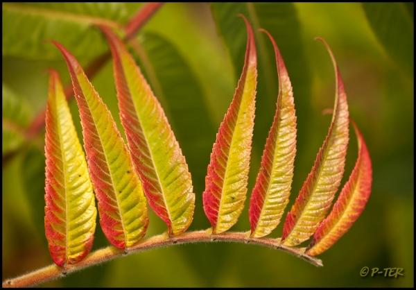 Autumn colors pallet