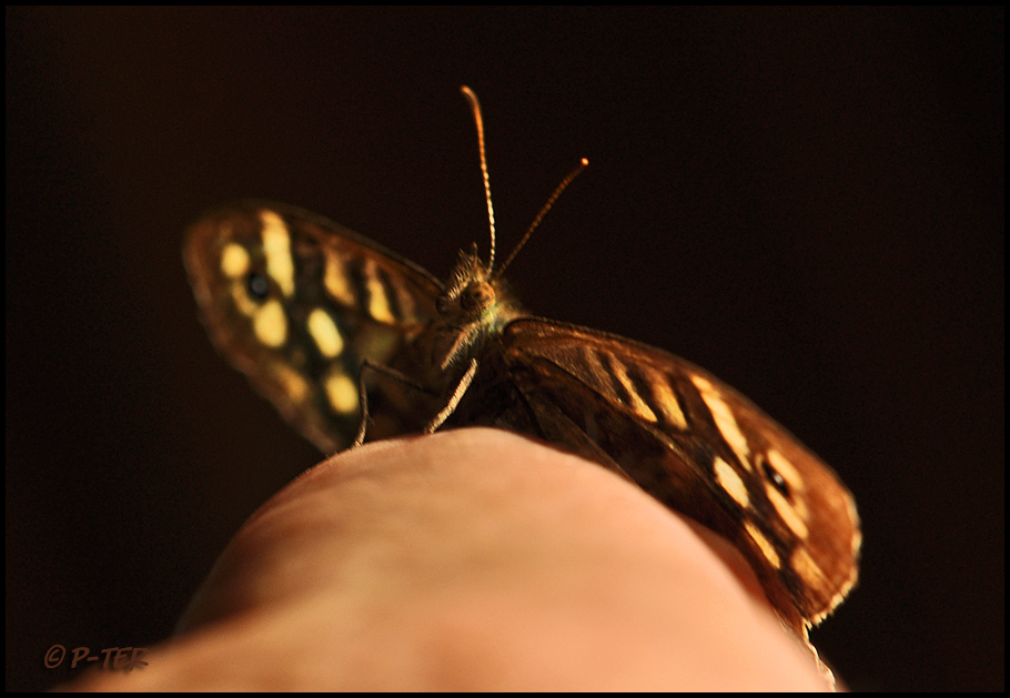 For the second time after three days a butterfly o
