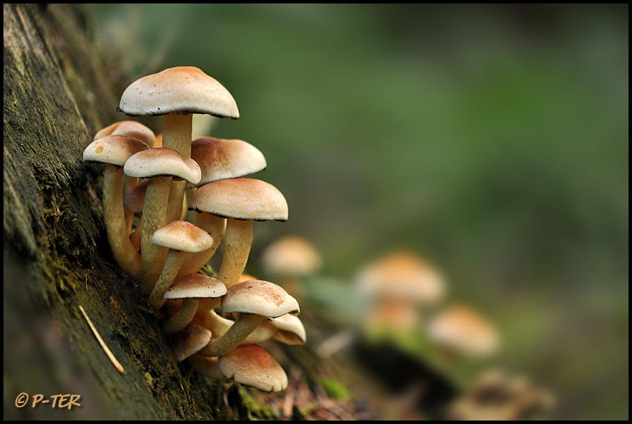 mushroom 5