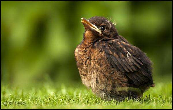 Im a bird