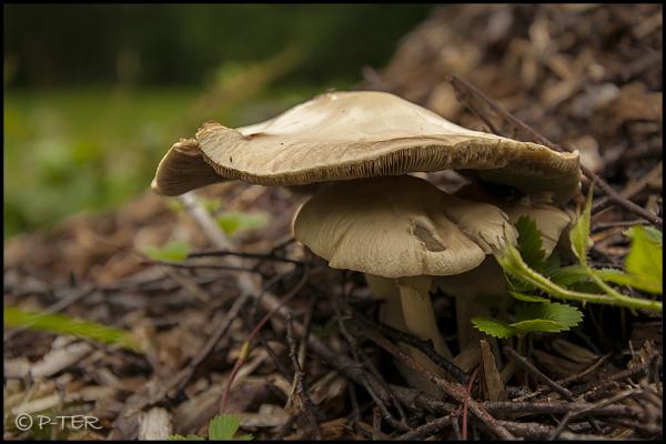 summer mushroom