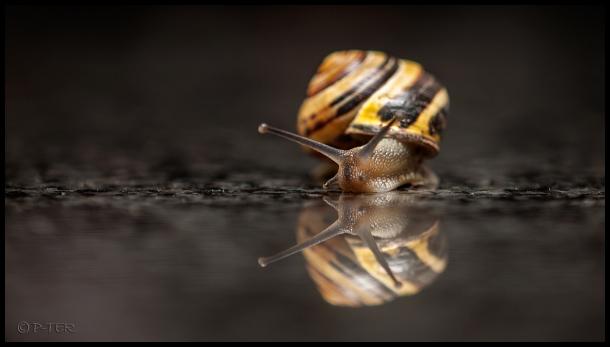 snail cottage animal garden slak huisje dier tuin
