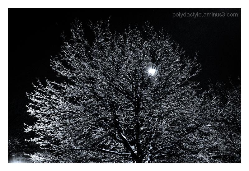 Arbre de glace devant lune d