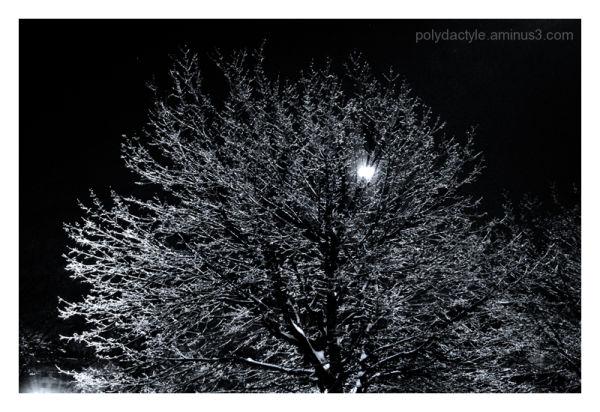 Arbre de glace devant lune d'hiver
