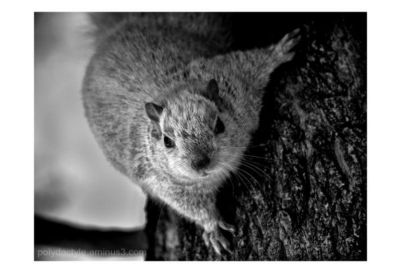 Méchant écureuil / Bad squirrel