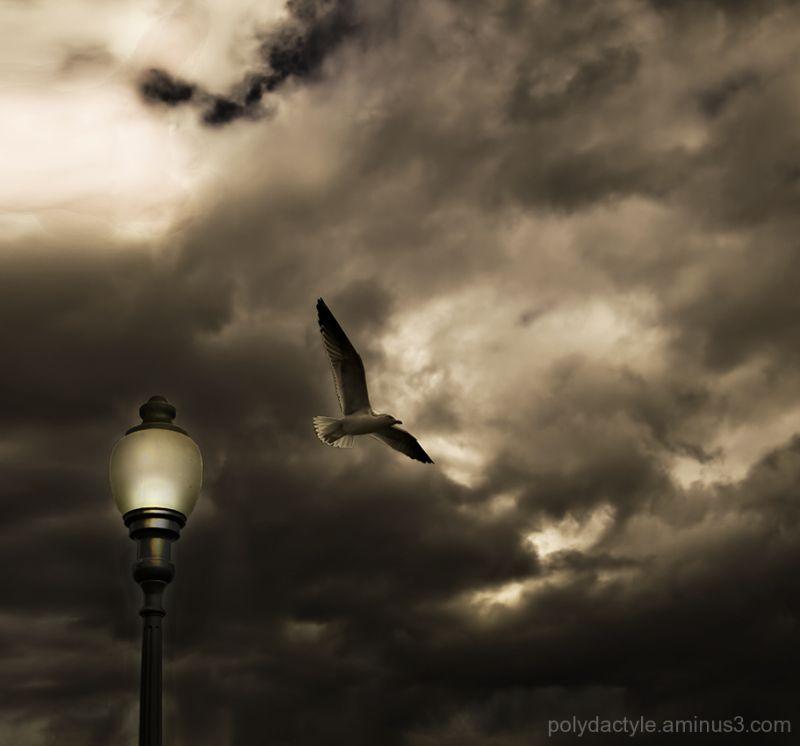 Oiseau crépusculaire