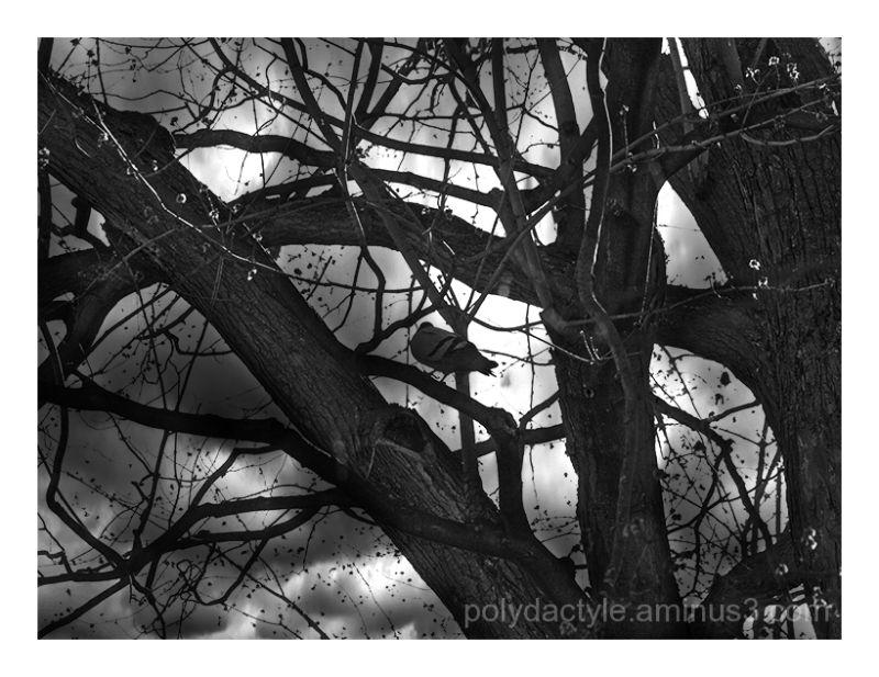 Bird and trees