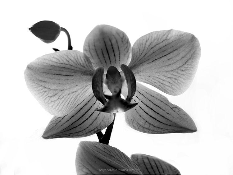 Douce orchidée