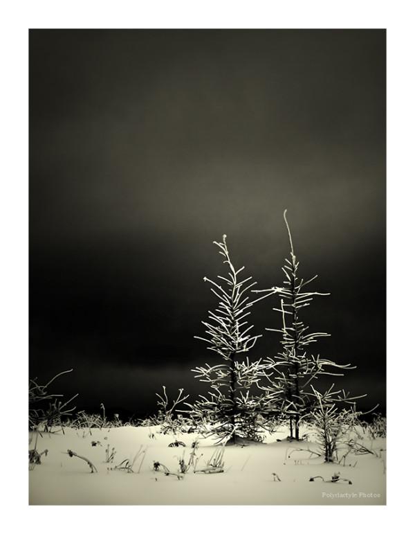 Neige noire I