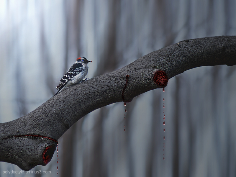 Killer Woodpecker