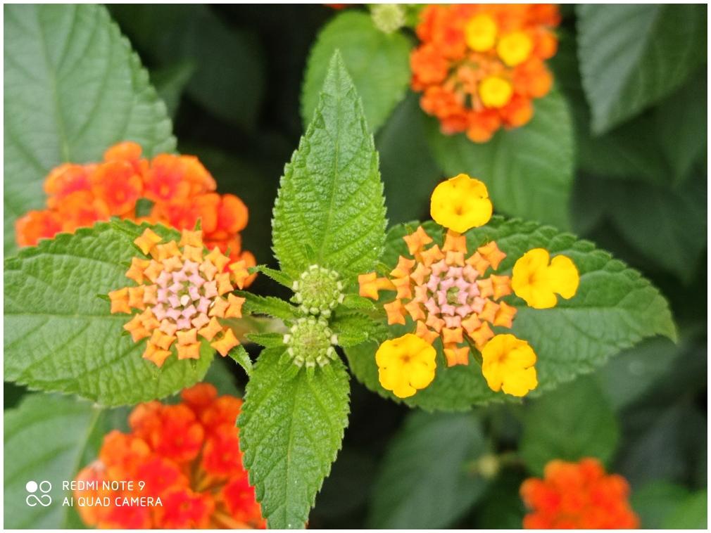 Fire, flower
