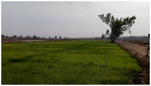 Noman Rani a Nijar