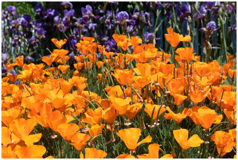 Spring Color in CA