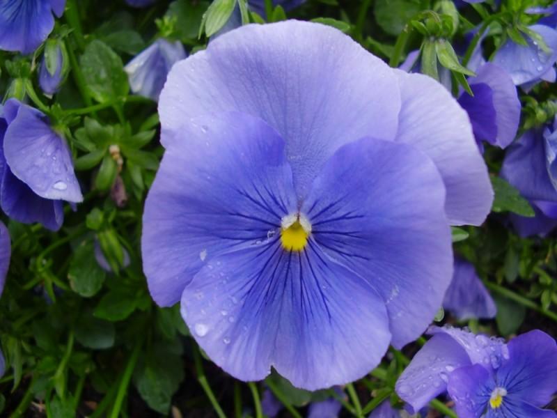 yeturi, flower, flowers