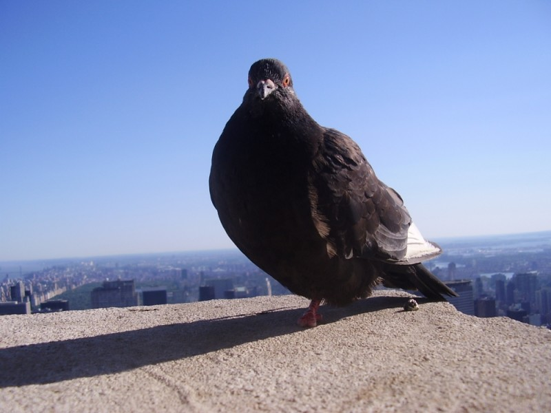 A bird on Empire State building